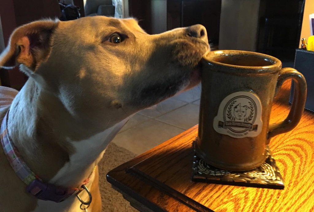 Bare Bones Brewery dog
