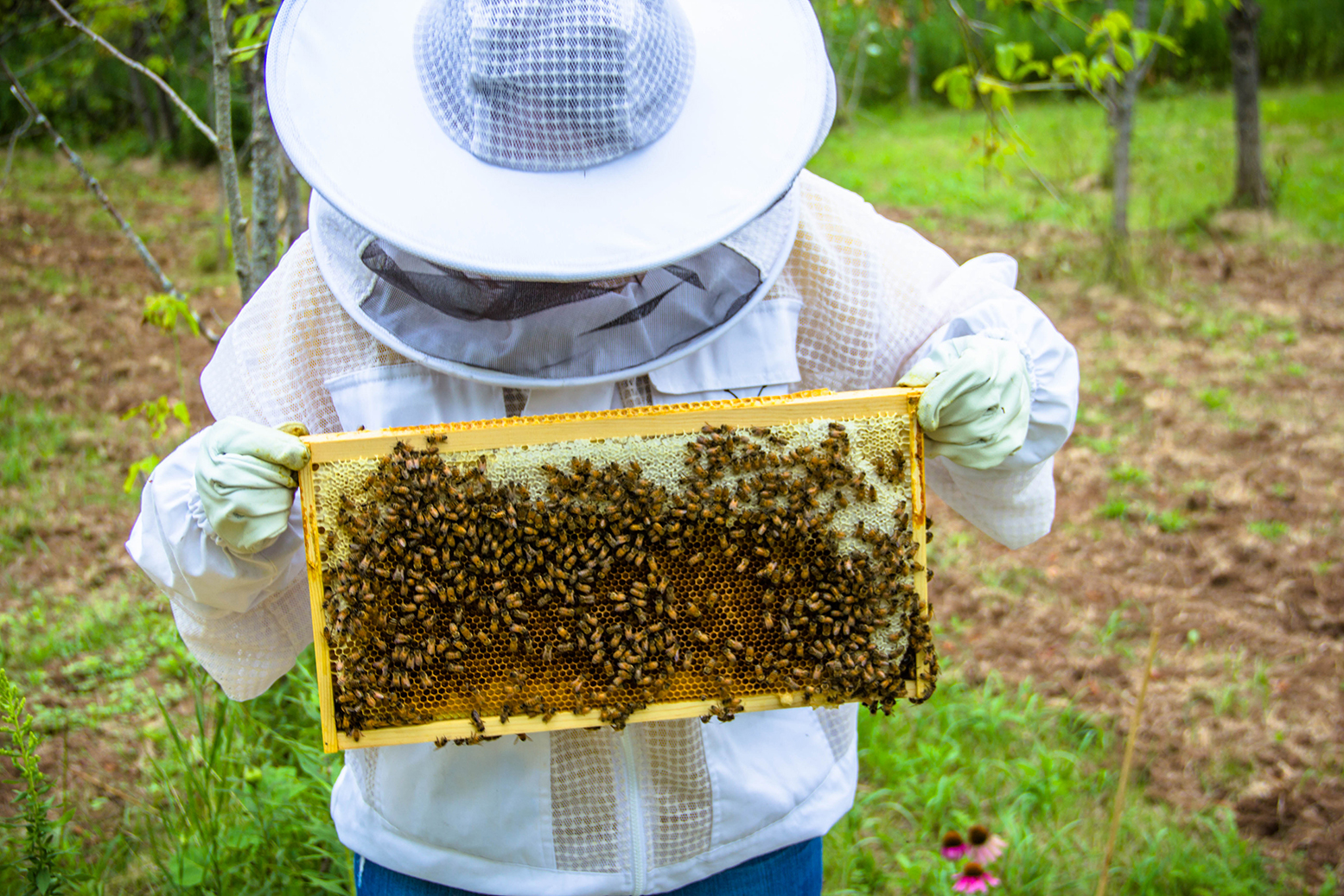Tips for Beekeeping and Handling Bees